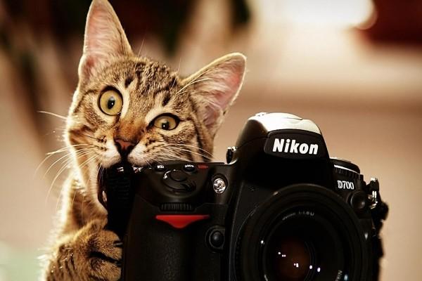 Gato mordiendo una cámara Nikon