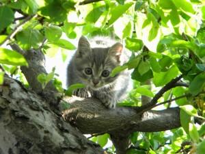 Gato entre las hojas de un árbol