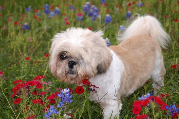 Un perro entre las flores