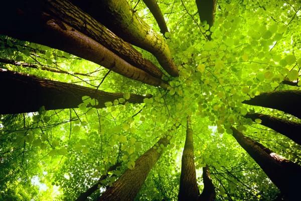 Grandes y frondosos árboles