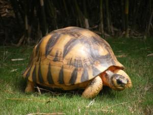 Tortuga caminando sobre la hierba