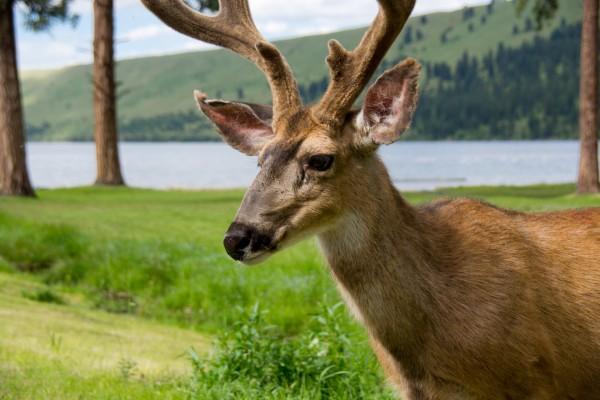 Un joven y hermoso ciervo
