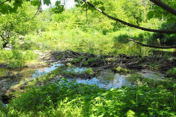 Plantas en el río
