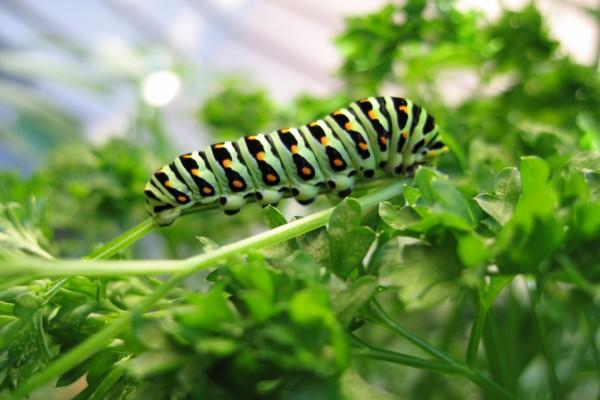 Oruga en el tallo de una planta