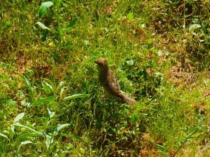 Pájaro sobre la hierba