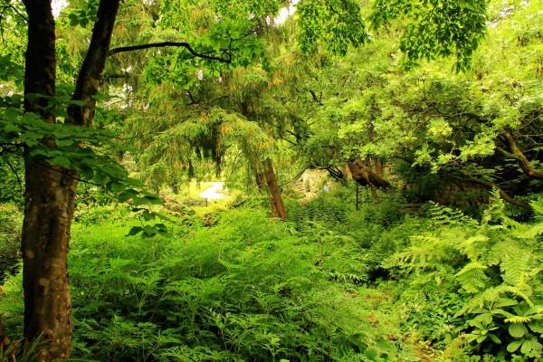Árboles, helechos y plantas
