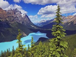 Postal: Un bello lago entre montañas y pinos