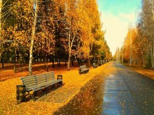 Postal: Parque solitario en otoño