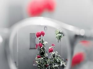 Rosal visto a través de unas gafas