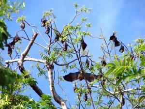 Murciélagos durmiendo sobre las ramas de un árbol