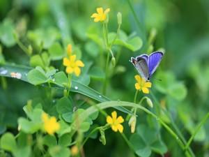 Postal: Bella mariposa sobre una florecilla amarilla