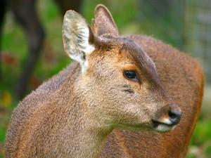Un ciervo visto de cerca