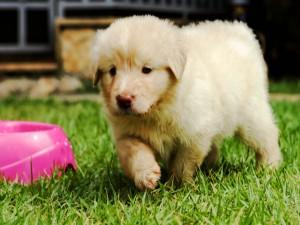 Cachorro caminando sobre la hierba