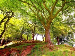 Grandes y hermosos árboles