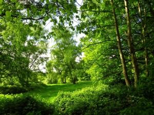 Postal: Una explanada verde entre los árboles