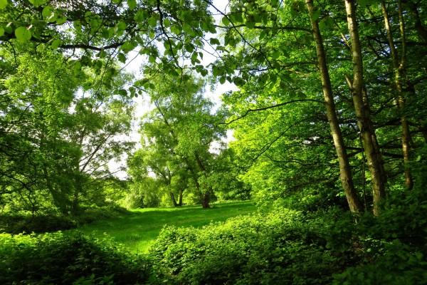 Una explanada verde entre los árboles