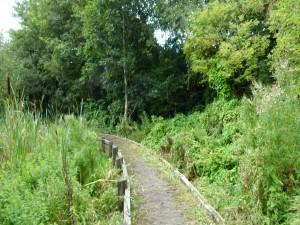 Paseo por la naturaleza