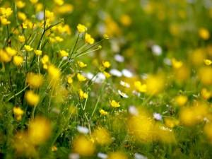Postal: Flores amarillas y blancas