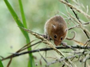 Postal: Ratón sobre una rama