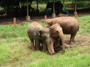 Elefantes en la hierba