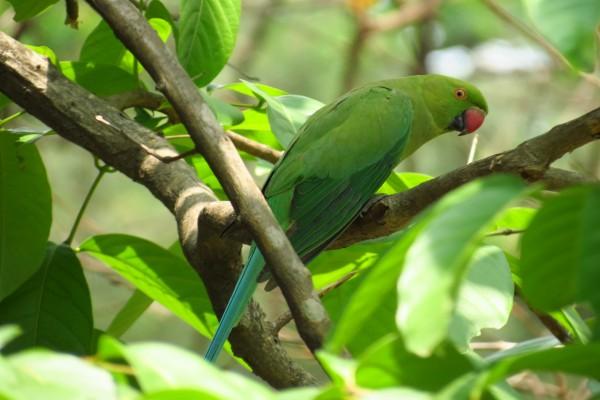 Un lorito verde en un árbol