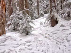 Postal: Nieve en el bosque