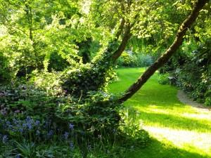 Postal: Árboles en un jardín