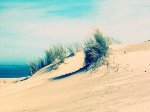 Postal: Arena junto al mar