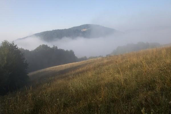 Niebla sobre el campo