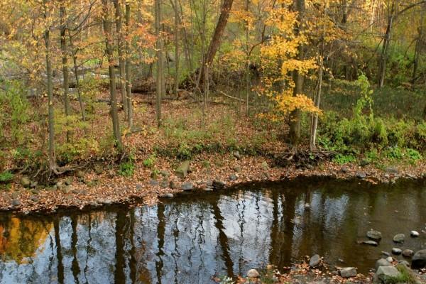 Piedras y hojas en la orilla de un río