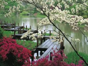 Postal: Puente de madera en un bonito jardín