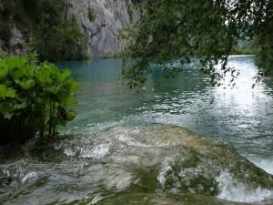 Postal: Plantas en la corriente de un río