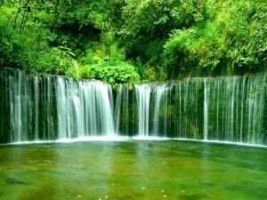 Árboles junto a la cascada