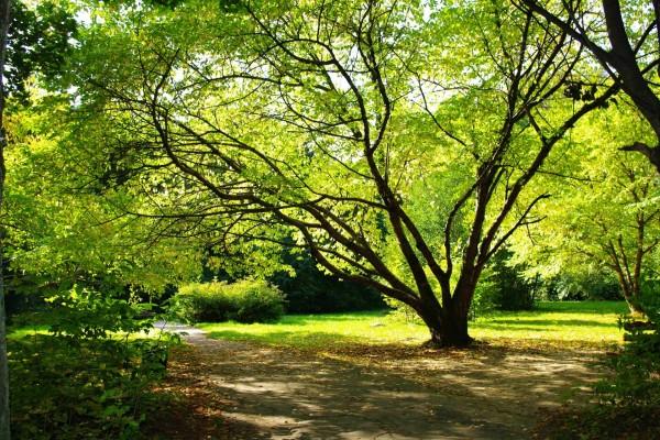 Árboles con hojas verdes junto al camino