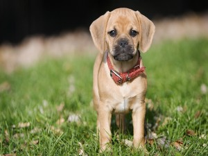 Postal: Un perro pequeño quieto sobre la hierba