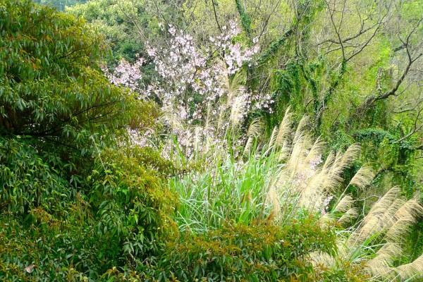 Plantas y flores en el campo