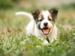 Postal: Cachorro corriendo sobre las plantas