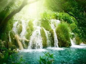 Postal: Cascada sobre las plantas