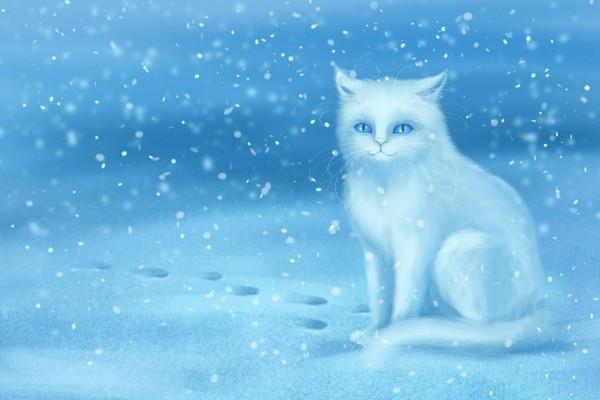 Un gato blanco en la nieve