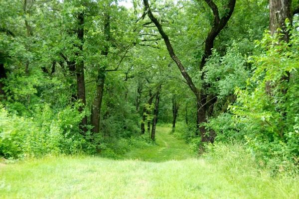 Camino cubierto de hierba en el bosque