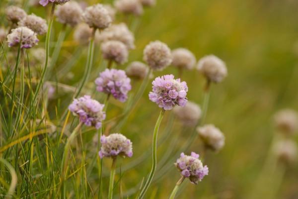 Pequeñas flores de color lila