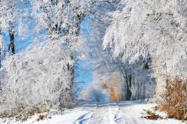 Árboles y camino cubiertos de nieve