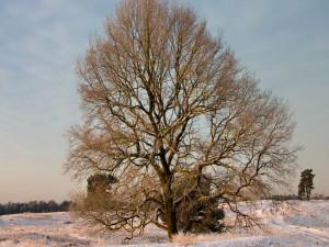 Nieve bajo un gran árbol