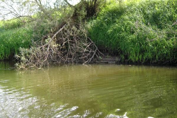 Ramas en el agua de un río