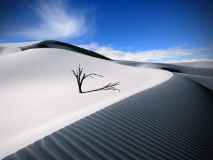 Postal: Árbol en la arena del desierto