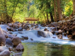 Postal: Puente de madera para cruzar el río