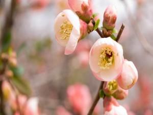Postal: Flores rosas en una rama