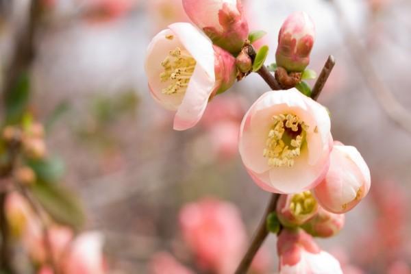 Flores rosas en una rama