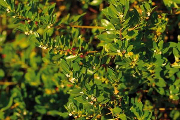 Arbusto recibiendo la luz del sol