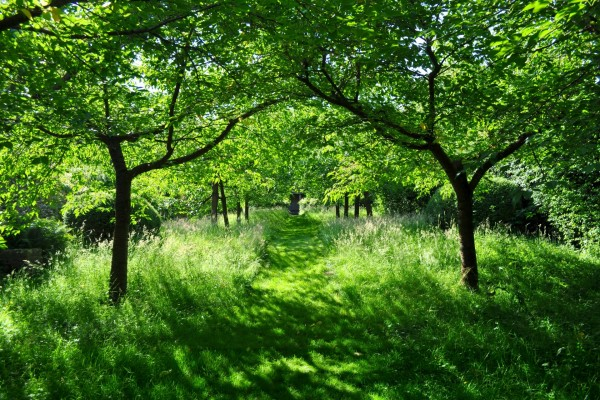 Camino entre árboles verdes